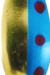 Blue/Red Spots Brass